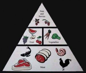 Paleo-Diet-Pyramid-300x254